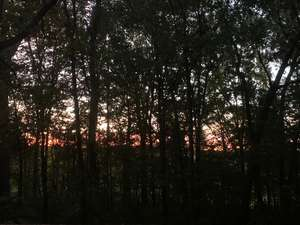 The forest at sunrise