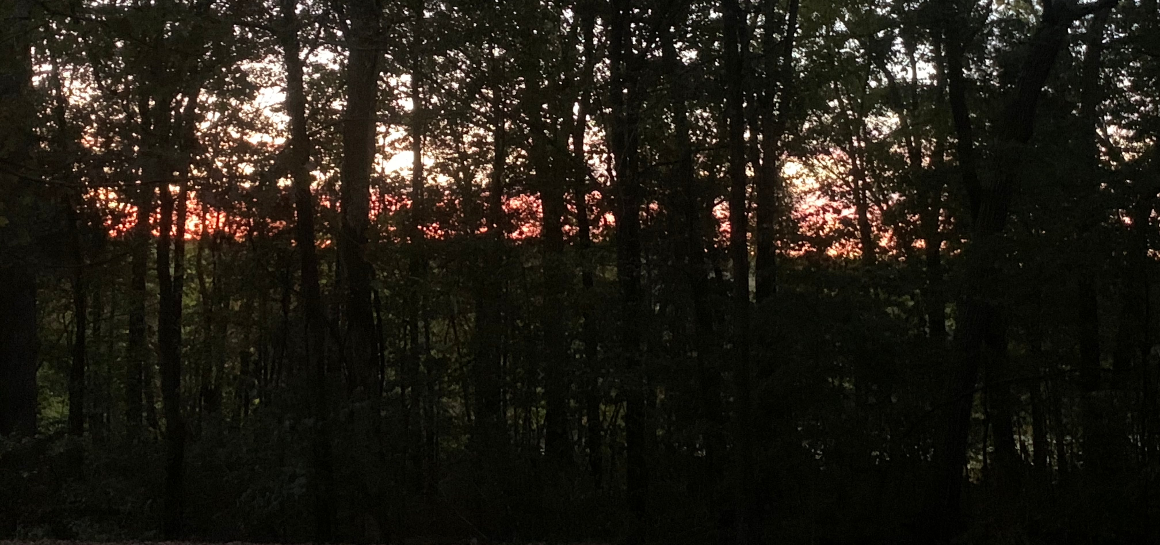 Sunrise over a Kentucky wood